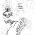 犬の顔222